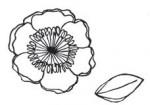 Tampon bois fleur&feuille