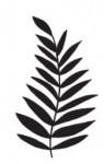 Tampon bois Palm branch
