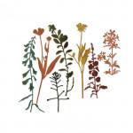 Sizzix Matrices de découpe  Fleurs sauvages