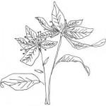 Tampon bois Poinsettia
