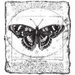 Tampon bois papillon collage