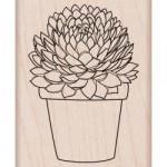 Tampon bois Succulente